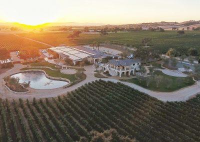 02 Estate Vineyard